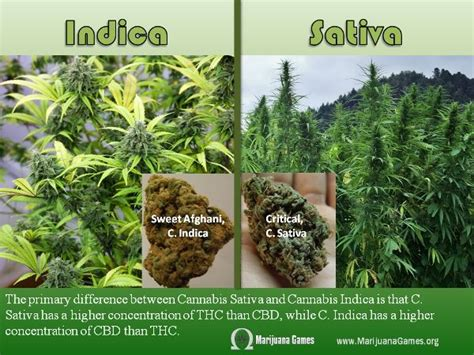 17 Best Images About Marijuana Facts On Pinterest