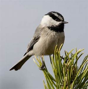 PDF Plans Birdhouse Plans Chickadees Download woodworking