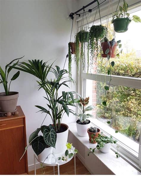 Outdoor Window Sill Plants by Instagram Plants Hanging In Window On Curtain Rod