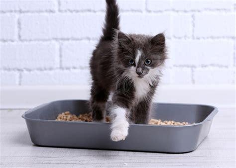 odeur urine chat canape 28 images odeur d ammoniac dans le bac 224 liti 232 re comment l 233