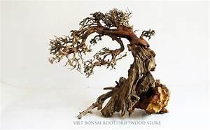 Bonsai Driftwood Tree - Viet Bonsai Root Driftwood