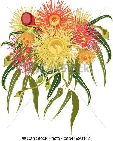artwork prints australian flowers vector vector illustration of