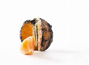 45 best images about Decomposing produce on Pinterest