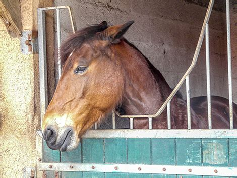 animal welfare potential  indicator  chronic stress