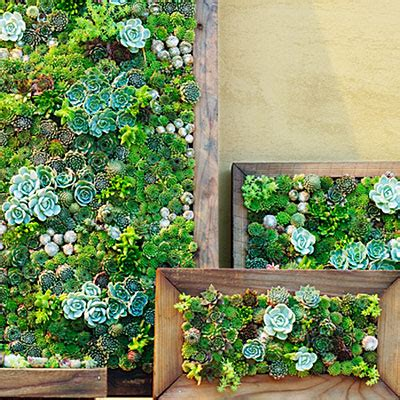 Vertical Garden Succulent Wall Panels by Succulent Wall Garden Centre