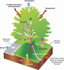 How Do You Calculate Stormwater Credits For Trees  Part 1