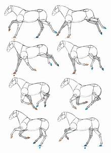 How To Draw And Animate Horses  From Trot To Gallup