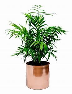 Small, Indoor, Plant, U2013, Monstera, Flowers