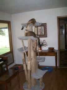 cat tree kingdom home