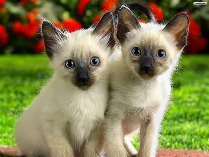 Cat Wallpapers Backgrounds Lovable Wonderful Cats Desktop