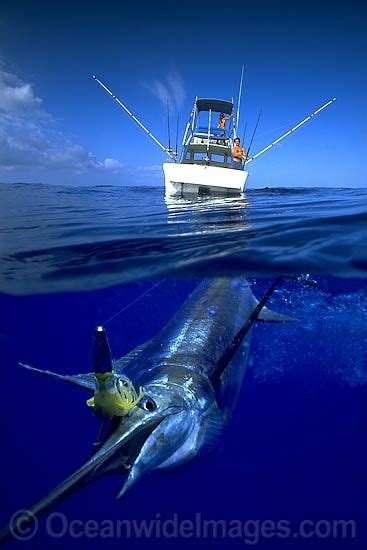 Tons of awesome fishing wallpapers to download for free. Marlin fight   Ocean fishing, Salt water fishing, Sea fishing