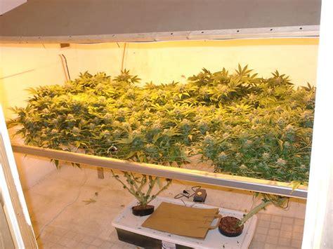 chambre de culture cannabis interieur soil vs hydroponics east coast marijuana