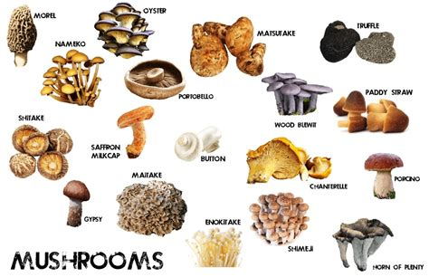 types of mushrooms pics for gt types of edible mushrooms