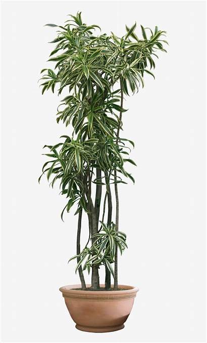 Plant Transparent Plants Clipart Background Tree Deviantart