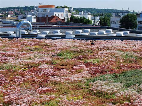 Dachbegruenung Pflanzen Fuer Die Extensivbegruenung by Extensive Dachbegr 252 Nung