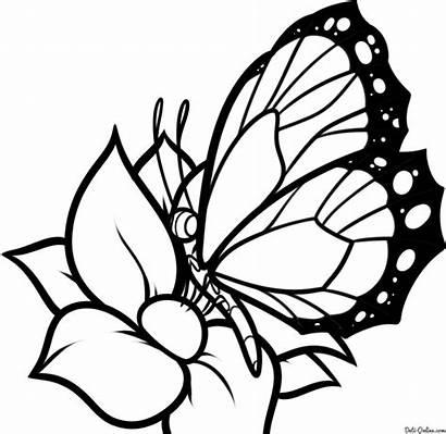 Colorear Dibujos Imprimir Mariposas Dibujo Gratis