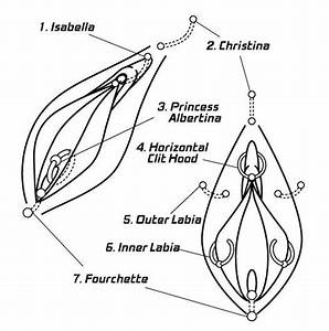 35 How To Find The Clitorus Diagram