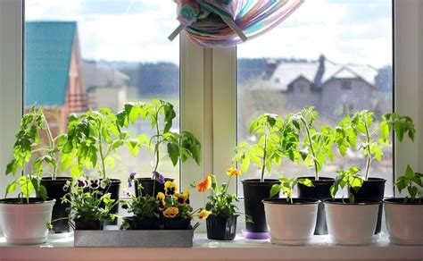 Windowsill Flower Garden by Top Culinary Herbs For Growing In Your Windowsill Garden