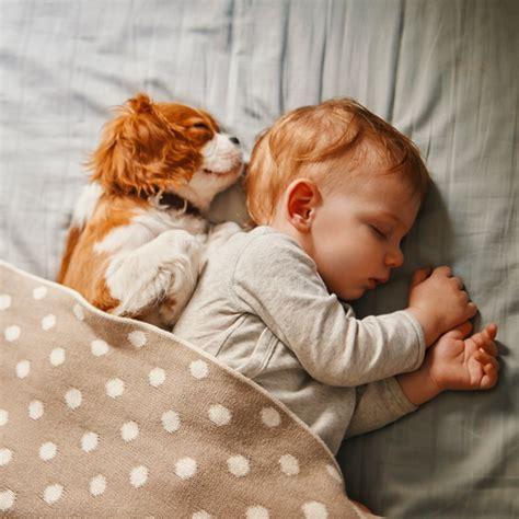prep  pet introducing   baby   fur baby