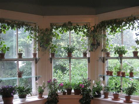 caleighwilz verdure garden windows