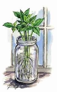 Easy Plant Propagation - Organic Gardening