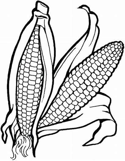 Vegetables Coloring Vegetable Fruits Corn Pages Drawing