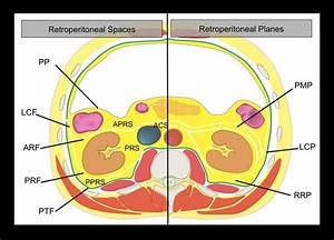 Drawing Of The Anatomy Of The Retroperitoneal Spaces At The Level Of
