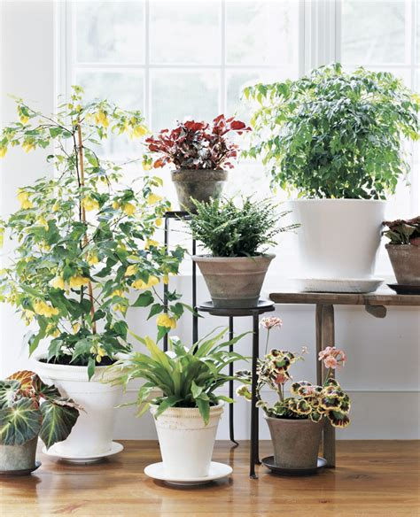 How To Choose A Plant For Every Room In Your House Real