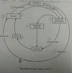 Draw A Well Labeled Diagram Of A Nitrogen Cycle