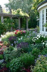 Beautiful Flower Garden Perennial
