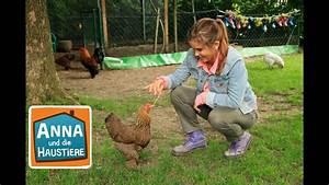 Haustiere Für Kinder : huhn reportage f r kinder anna und die haustiere youtube ~ Orissabook.com Haus und Dekorationen