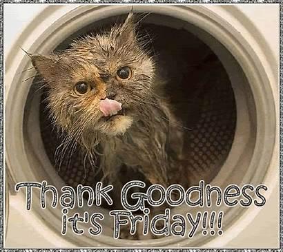 Friday Happy Thank Cat Gifs Funny Cats