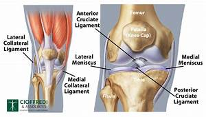 Knee Joint Overview