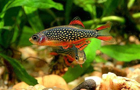 poissons exotiques vente magasin uniquement nano