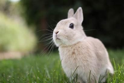 Rabbit Wallpapers Rabbits Desktop 4k Bunny Animals