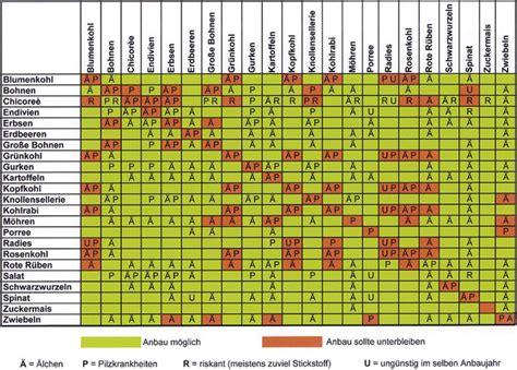 welche pflanzen vertragen sich tabelle die besten 25 fruchtfolge ideen auf mischkultur companion planting chart und