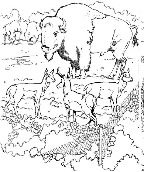 zoo coloring pages coloringpagescom