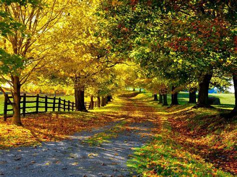 nature auntum tree road wallpaper images hd