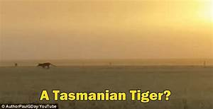 Are these images proof the Tasmanian Tiger isn't extinct ...