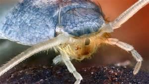 Hilfe Gegen Silberfische : silberfischchen wann die insekten gef hrlich werden ~ Michelbontemps.com Haus und Dekorationen