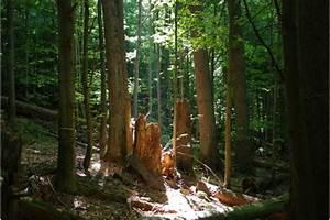 Bilder Vom Wald : auch im wald fakten statt m rchen wissenschaft statt wohlleben online petition ~ Yasmunasinghe.com Haus und Dekorationen