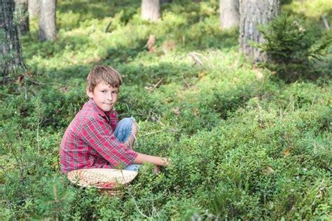 Heidelbeere Im Garten Pflanzen by Heidelbeeren Pflanzen Erincabatingan
