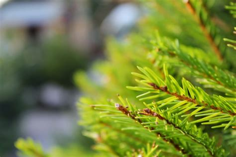 reason for christmas trees 9 reasons your tree should be real not artificial this year metro news