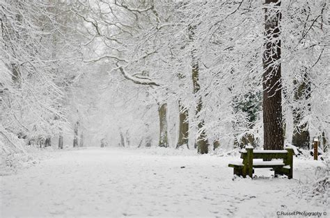 snow picture forest chris russell photography