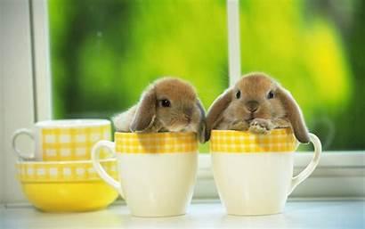 Easter Happy Bunny Bunnies Cutenessoverflow Found Rabbit