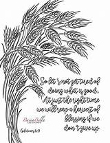 Wheat Coloring Galations Tired Zen Adult Tangle Lets sketch template
