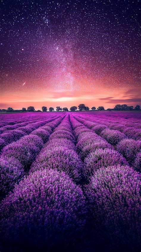 lavender field starry sky wallpaper