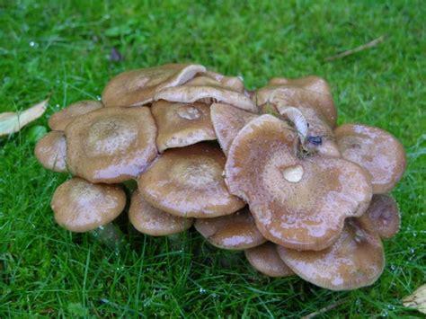 Die Häufigsten Pilze Im Garten by Kleine Zeichen Signs Abenteuer Garten