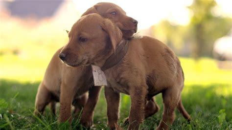 cute puppy race   ultra hd youtube