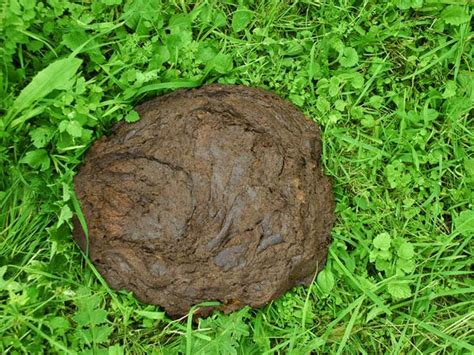 mobile coupons now buy cow dung cakes oneindia